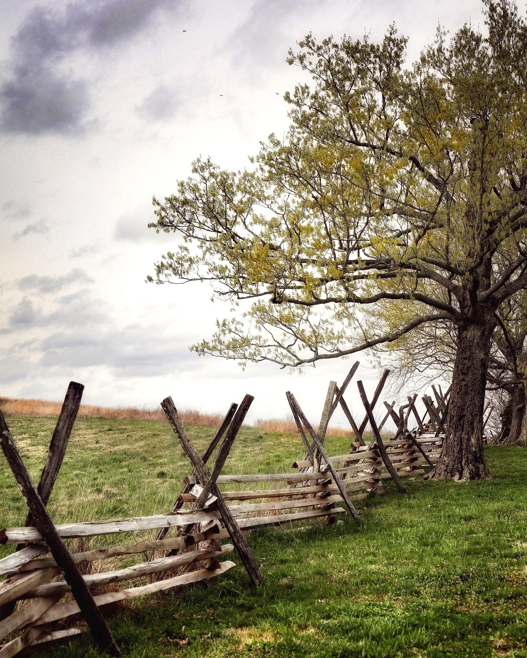 """Split Rail Fence At Civil War Battleground, Perryville, Ky"" by Robert Ellis"