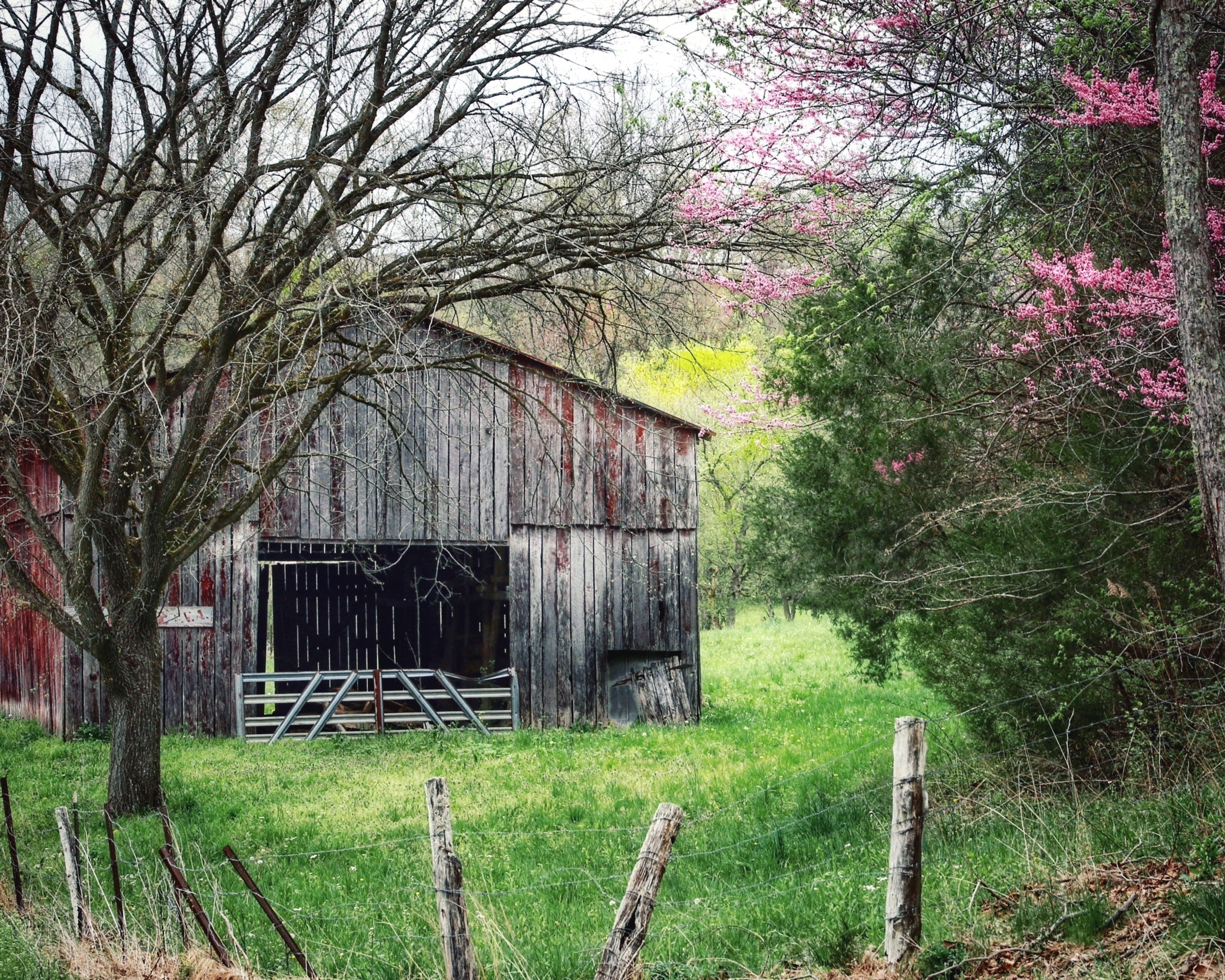 """Spring Arrives in Kentucky"" by Robert Ellis"