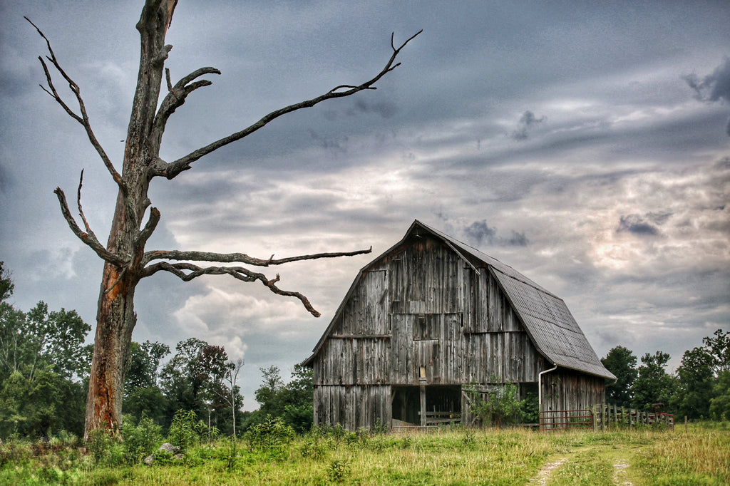 """Old Barn Near Broke Leg Falls"" by Robert Ellis"