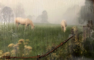 """White horses in meadow"" by Linda Fugate-Blumer"