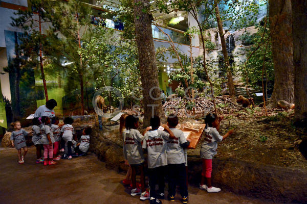 Children at natural history museum - Colorstock™  © Anna-Rhesa Versola  - diverse stock photos