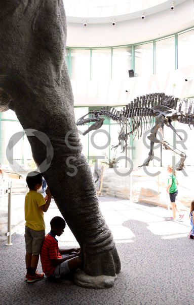 Children at natural history museum looking at dinosaurs - Colorstock™  © Anna-Rhesa Versola  - diverse stock photos