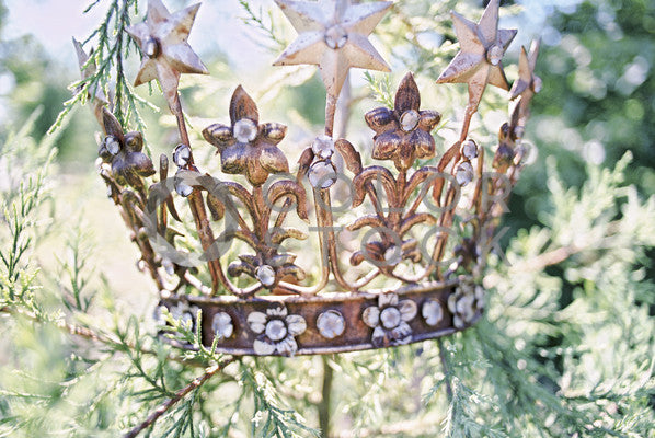 Crown in the trees, Nicole Caudle - Colorstock: diverse stock photos