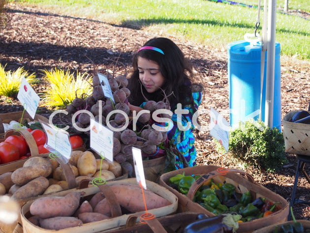 Girl inspecting vegetables at farmer's market - Colorstock™  © Jenifer Daniels  - diverse stock photos