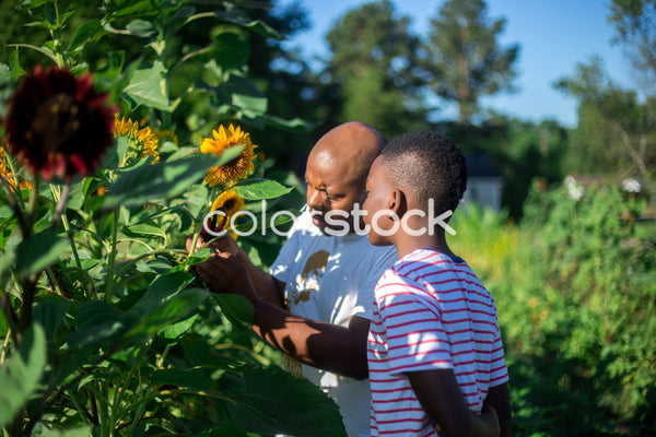Man and child working in the garden - Colorstock™  © Latoya Dixon  - diverse stock photos
