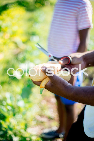 Man holding vegetables in garden - Colorstock™  © Latoya Dixon  - diverse stock photos