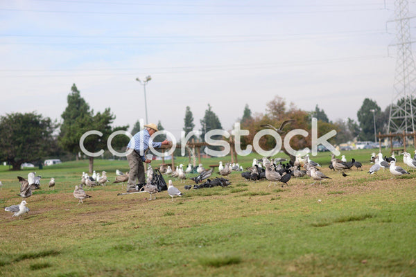 Older man tossing food to birds - Colorstock™  © PorterhouseLA  - diverse stock photos