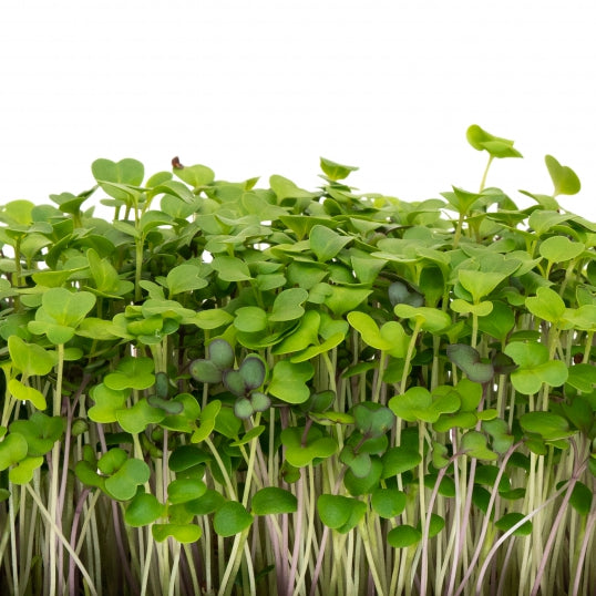 Mumm's Sprouting Seeds Mellow Microgreen Mix 100g