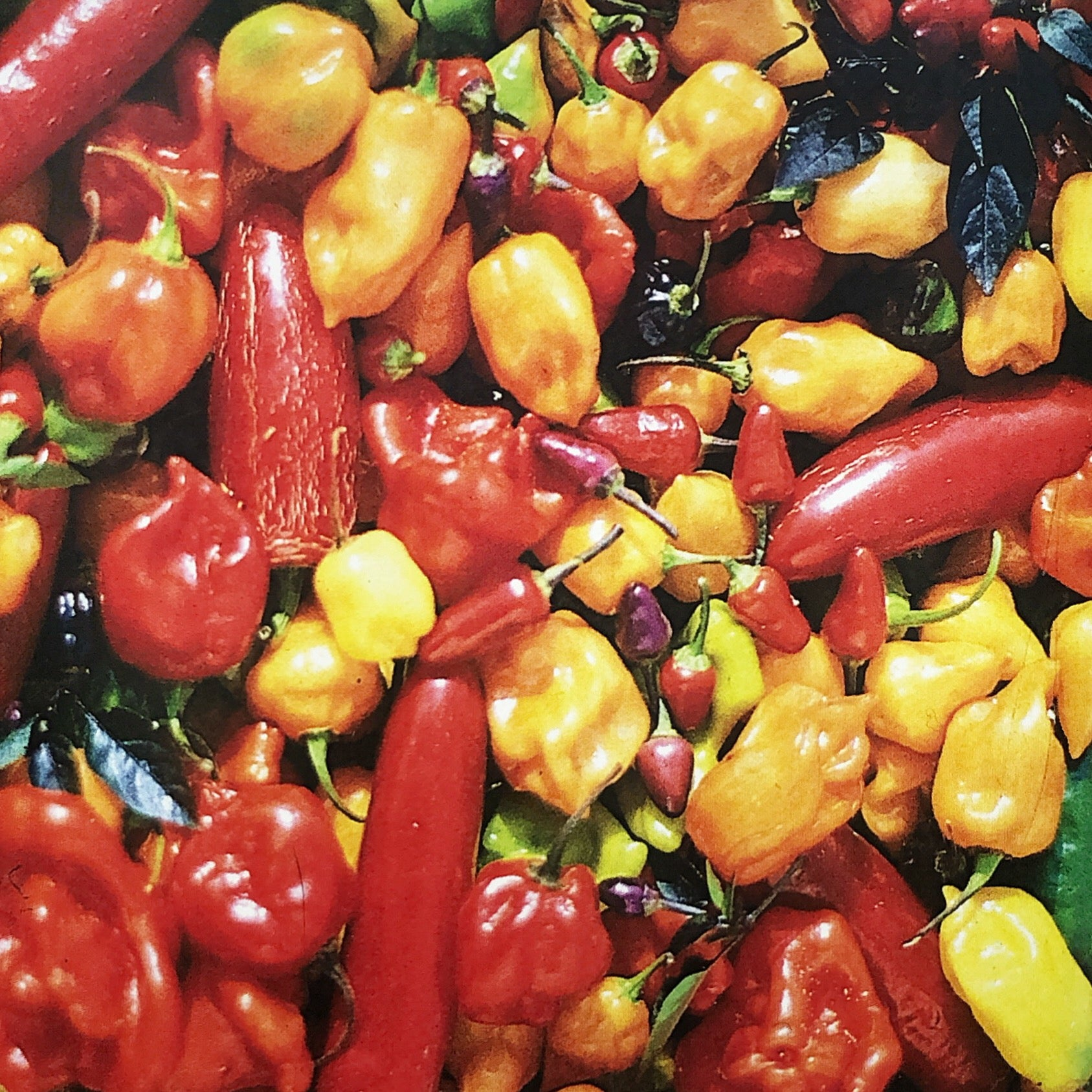 Pepper, Portuguese Hot Mix
