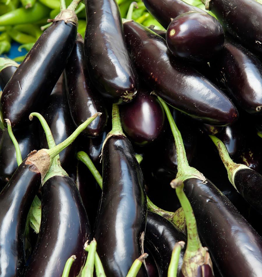 Eggplant Long Purple