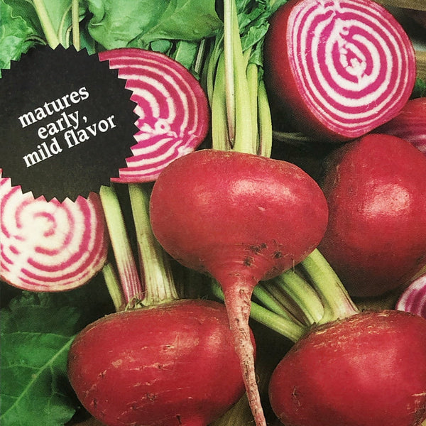 Beet, Chioggia Candy Cane