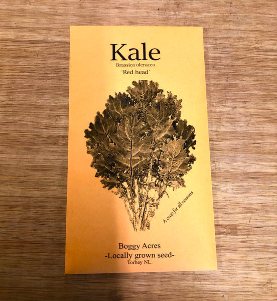LOCAL Kale Seed 'Red Head'