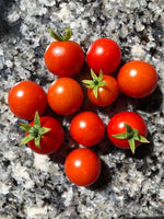Load image into Gallery viewer, Tomato, Tiny Tim Bush