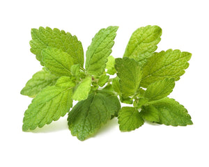 Click and Grow Refill 3- Pack - Lemon Balm