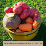 Load image into Gallery viewer, Turnip, Marian Purple Top - Clubroot Resistant