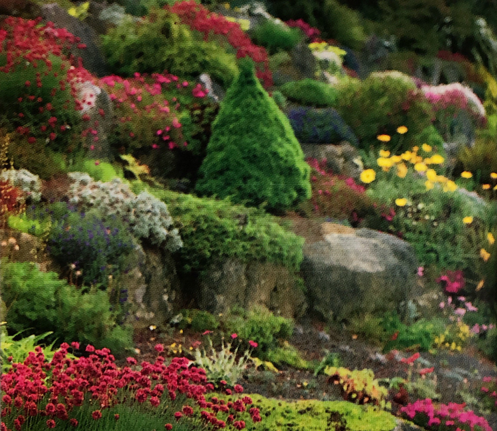 Rock Garden, Perennial Mix