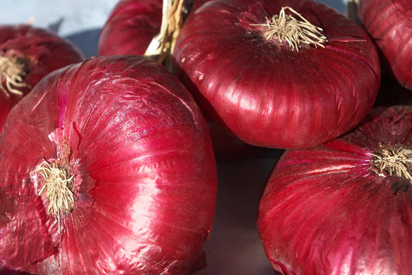 Onion, Red Burgundy (seed)