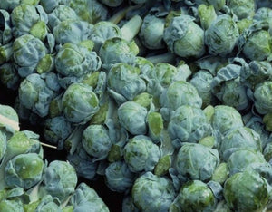 Brussel Sprouts, Long Island Improved