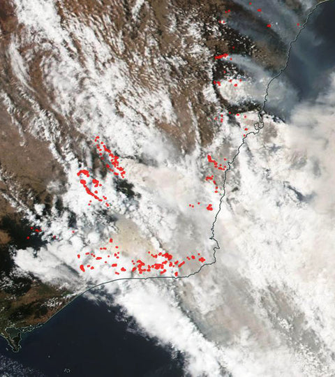 Australia's Bushfires: How To Help