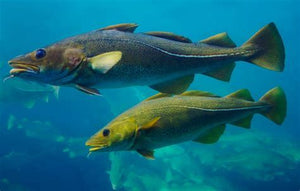 ANNOUNCEMENT: New!!! A Roadmap for fish migration is developed by Nature At Work!!
