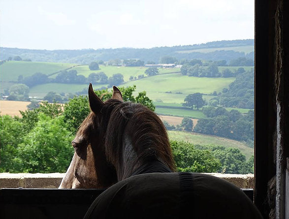 Stay in an English farm cottage!with or without your horse!