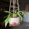 Leather Plant Hammock