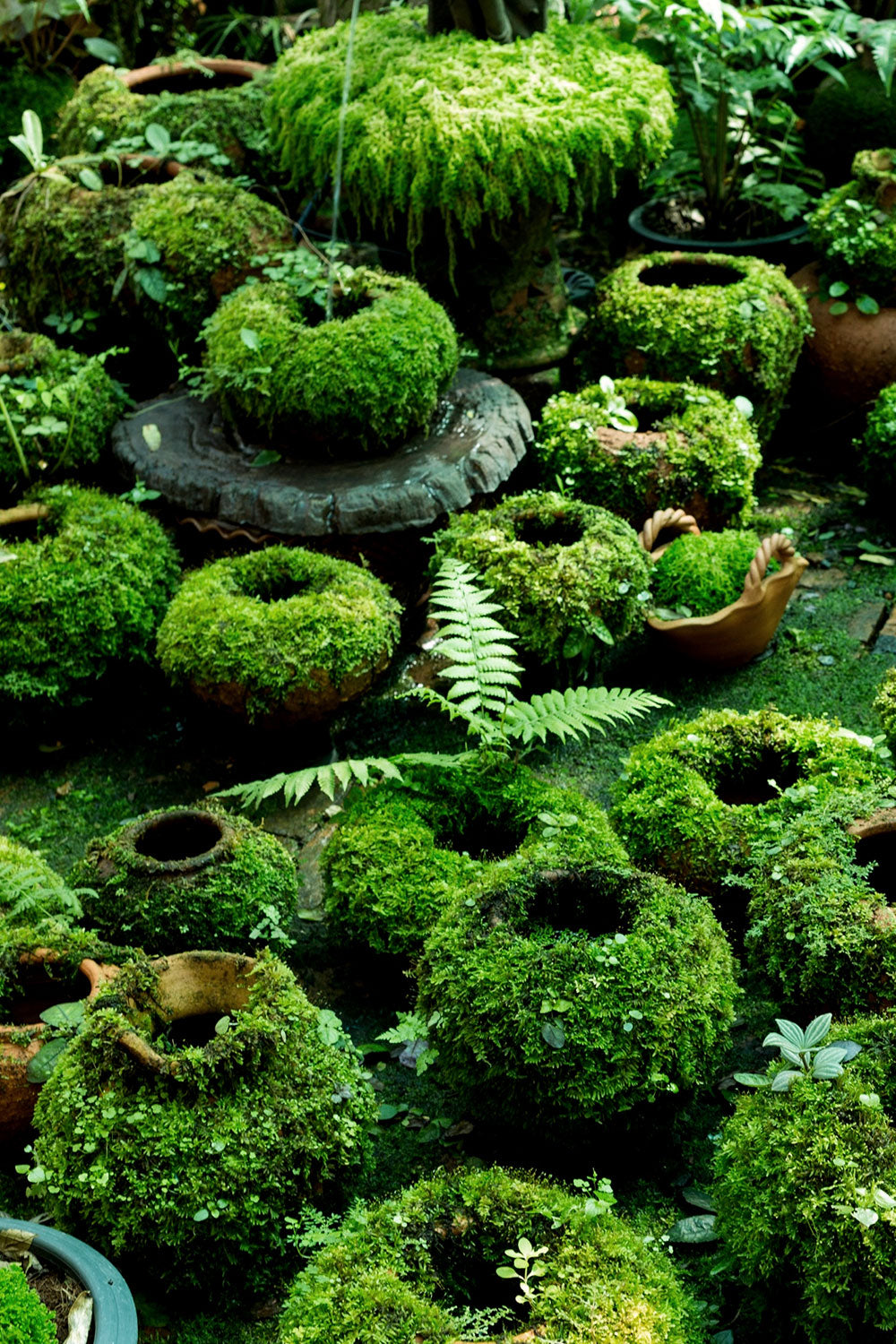 DIY Moss-Covered Pots for your garden