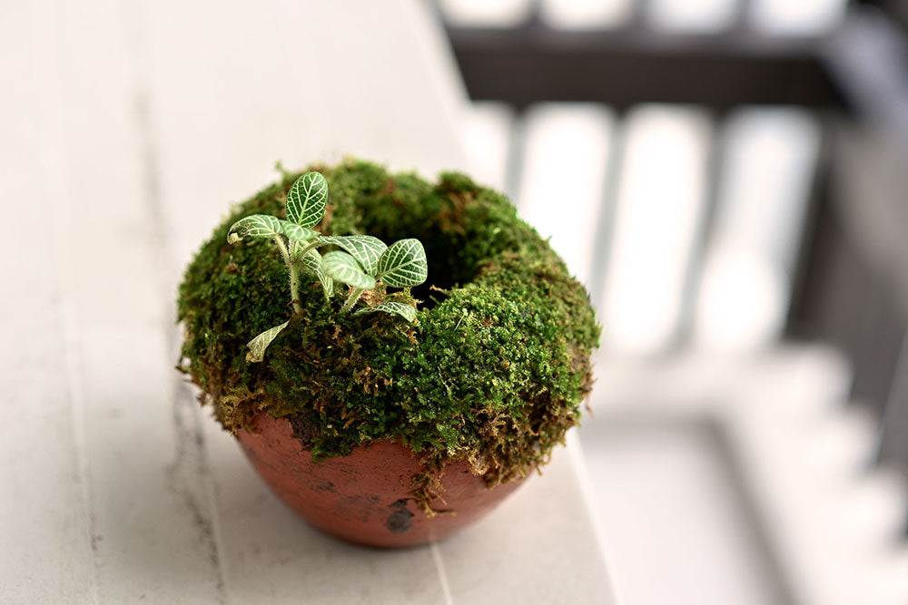 DIY Moss Covered Pot