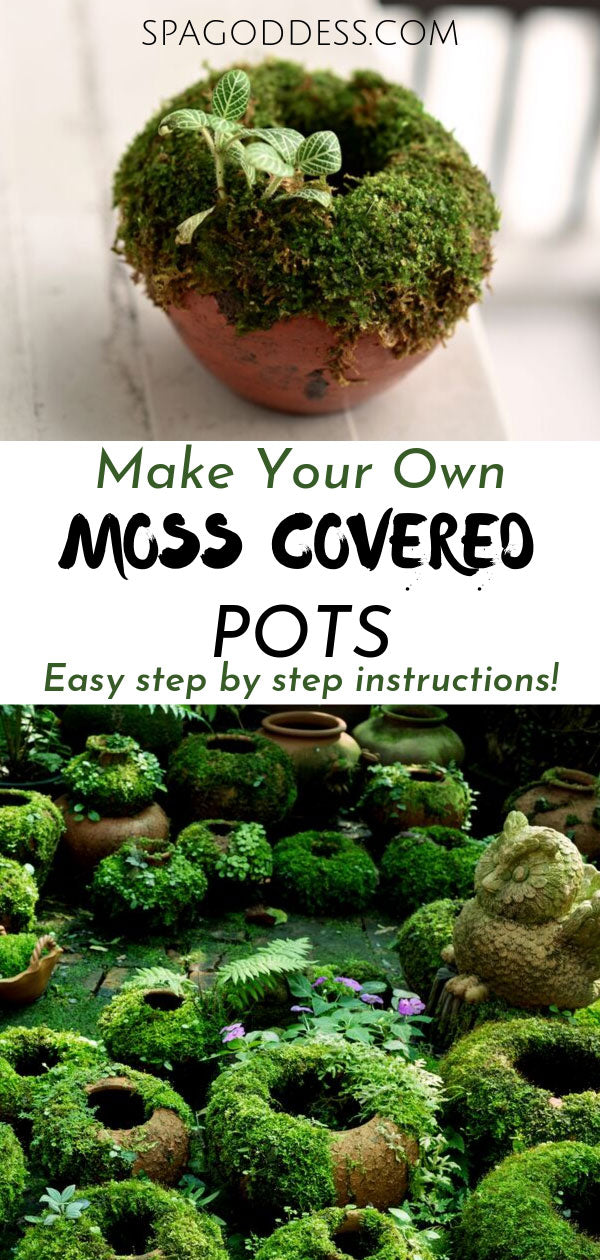 How To Make Moss Pots | SpaGoddess Apothecary - Click through to learn how to make moss pots for your home & garden. | moss garden | moss garden outdoor | eco friendly living diy | moss pot ideas | how to grow green moss pots | beautiful diy nature ideas | house plant ideas | diy plant decor ideas | diy plant decor tutorials | green living crafts | moss potted plants | moss pot centerpiece | diy plant pots recycled | how to make diy plant pots #diy #shadegarden #houseplants #gardeningprojects