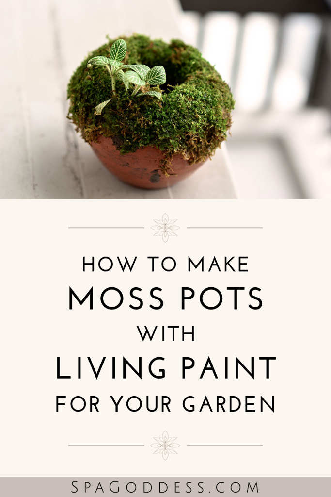 how to make moss pots - spagoddess apothecary