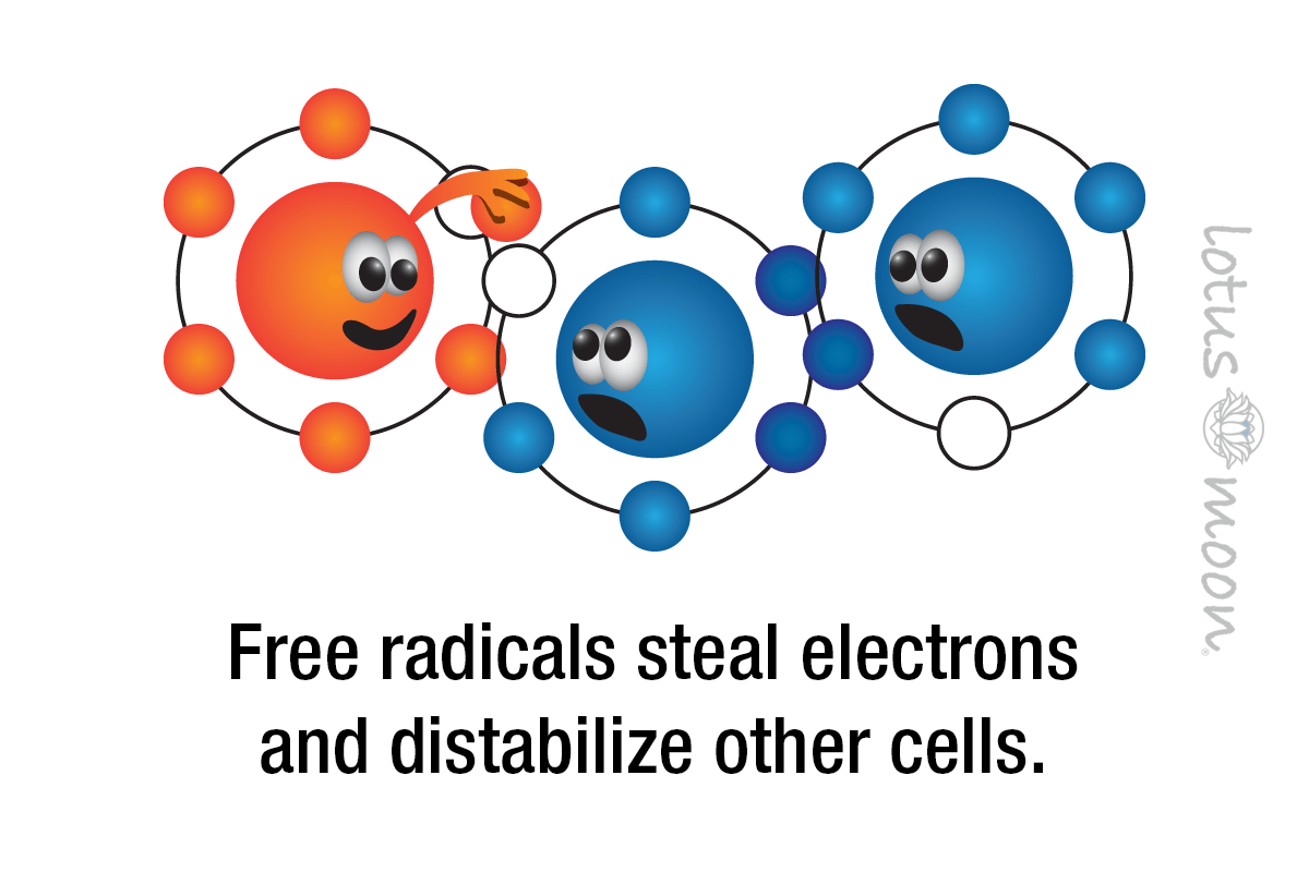 Free radicals steal electrons and distabilize other cells.