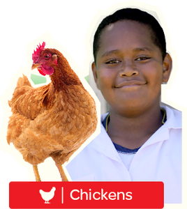 Chickens - Digital Gift Card