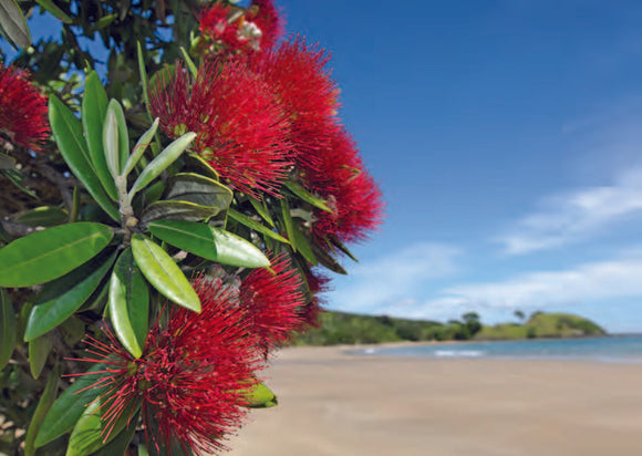 Pohutukawa Beach Christmas Cards (pack of 8)
