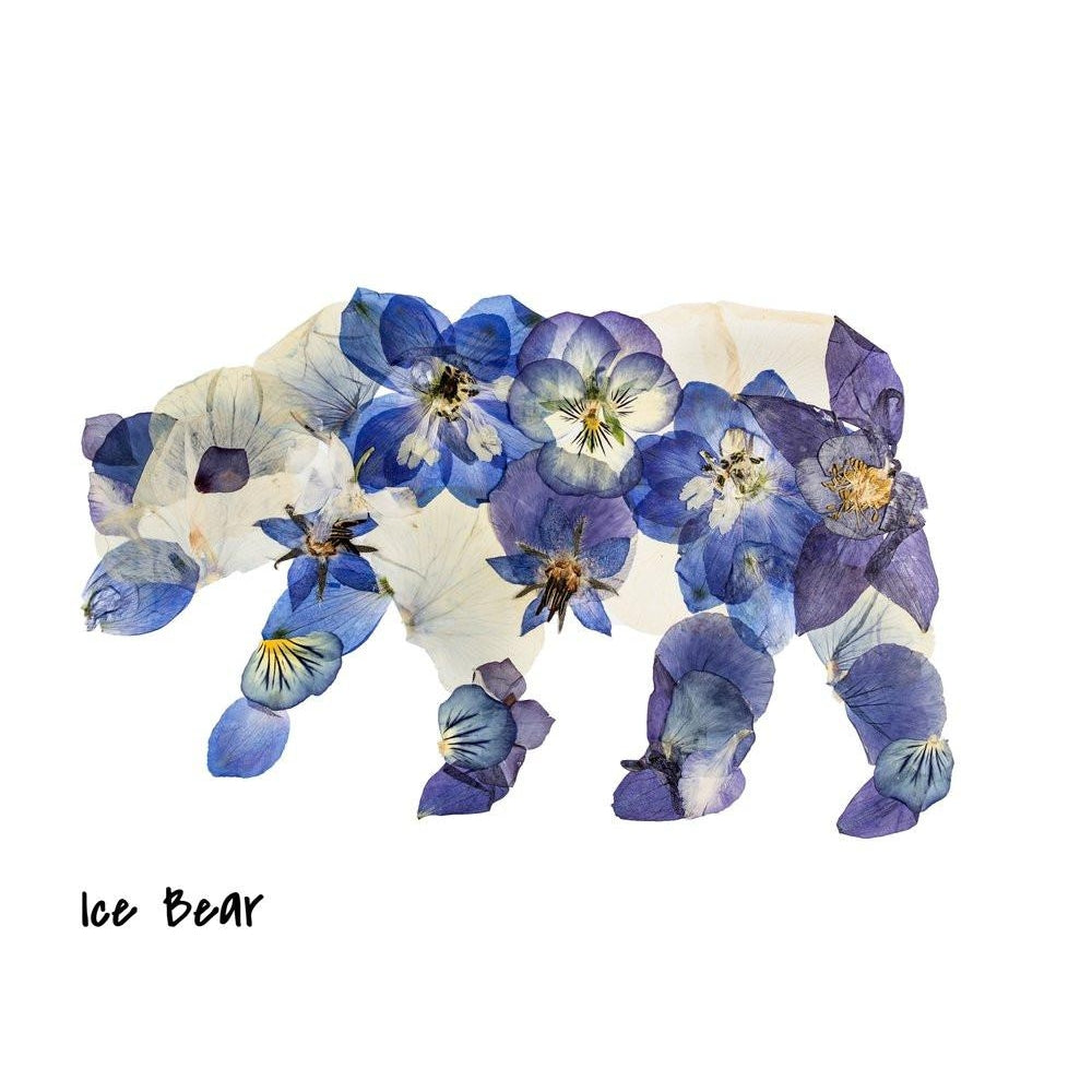 Ice Bear Pressed Flower Art Print