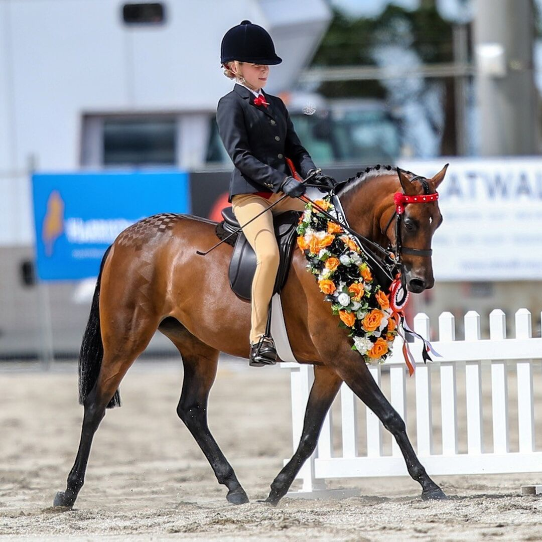 New Zealand Pony Champion Eastdale Diva