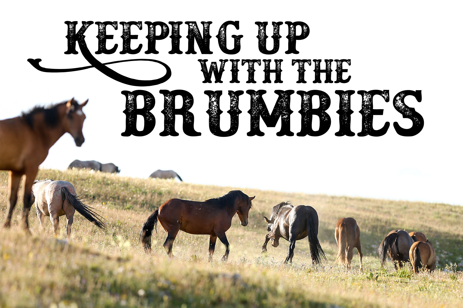 Keep up with the Brumbies with your piece of the journey