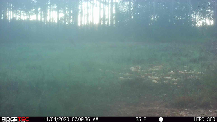 Why are my Trail Camera Pictures Foggy Sometimes