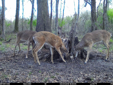 Do Deer Like Max 360 Deer Mineral