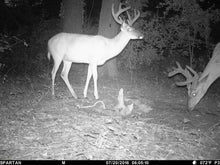 Load image into Gallery viewer, Max 360 Deer Mineral Free Ship on 12lb