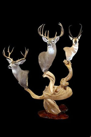 wood pedestal whitetail mounts