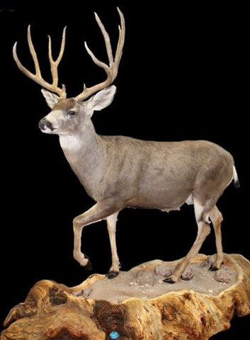 lifesize taxidermy habitat base floor mount pedestal
