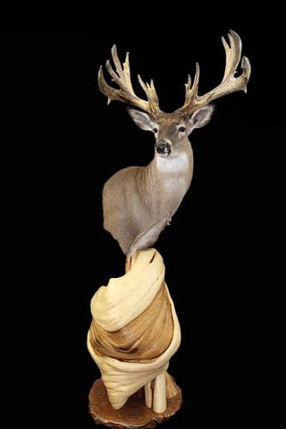 shoulder mount taxidermy custom pedestal display stands