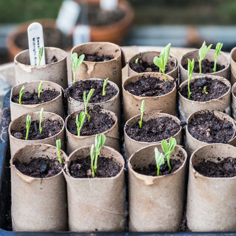 use our compostable deodorant tubes as seed starters
