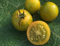 Orange-Green Zebra Tomato