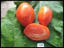 Oregon Pride Tomato