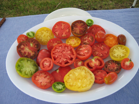 Rainbow Heirloom Tomato Mix