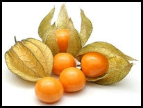 Cape Gooseberry Groundcherry