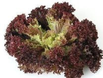 Dark Lollo Rossa Lettuce