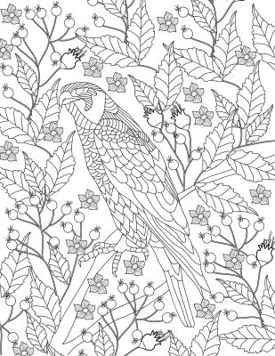 zentangle birds coloring page. adult rocky and bullwinkle ...