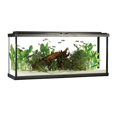 Fluval 55 gal LED Aquarium Kit